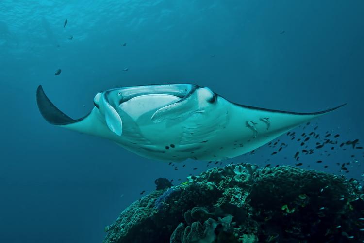 Manta Mantra Photo Image Gallery - Dampier Strait in Raja Ampat_3