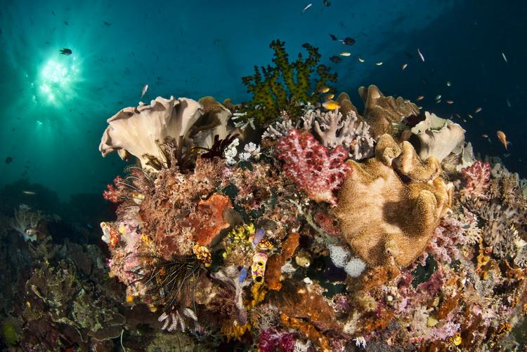 Mioskon Photo Image Gallery - Dampier Strait, Raja Ampat_1