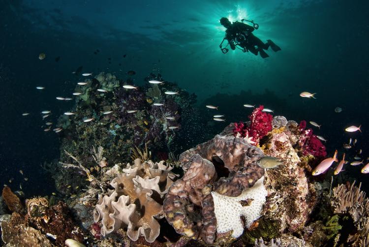 Mioskon Photo Image Gallery - Dampier Strait, Raja Ampat_2