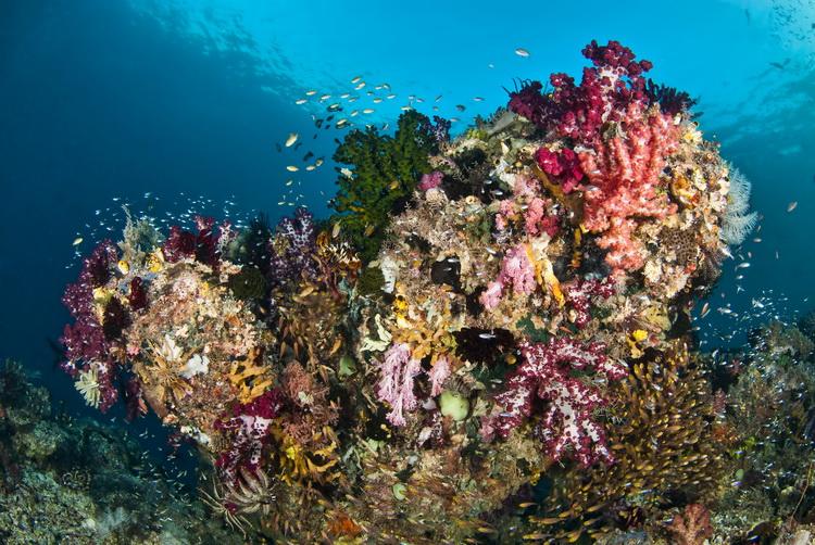 Mioskon Photo Image Gallery - Dampier Strait, Raja Ampat_3