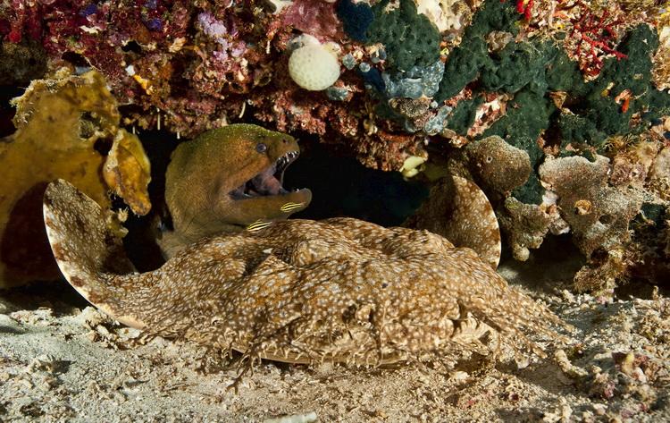 Mioskon Photo Image Gallery - Dampier Strait, Raja Ampat_4