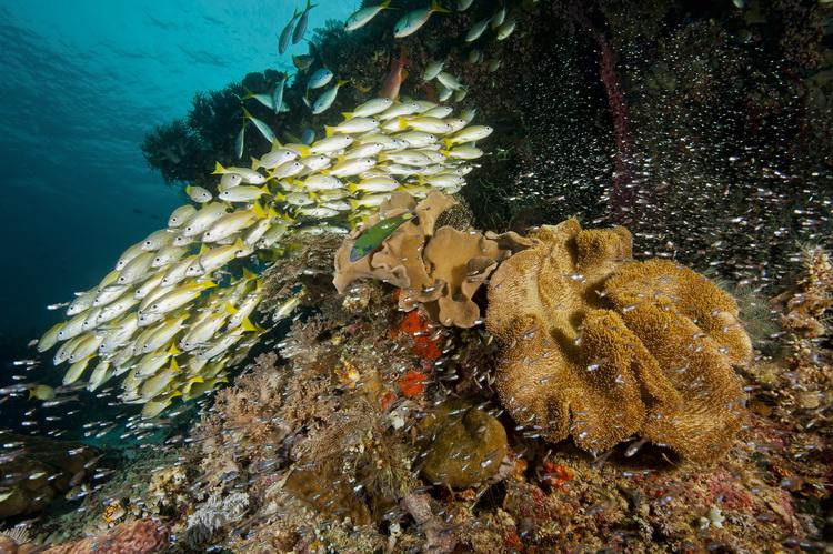Mioskon Photo Image Gallery - Dampier Strait, Raja Ampat_5