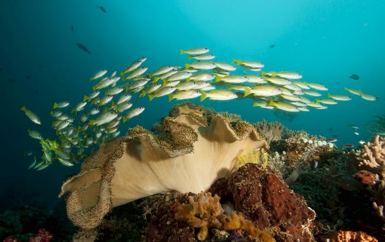 Mioskon Photo Image Gallery - Dampier Strait, Raja Ampat_6