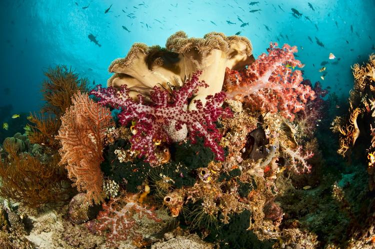 Mioskon Photo Image Gallery - Dampier Strait, Raja Ampat_7