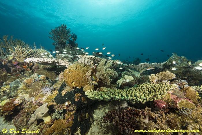 Underwater Beloi, Atauro Island_5