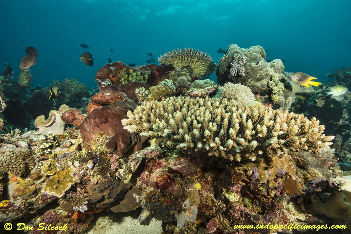 Underwater Beloi, Atauro Island_6