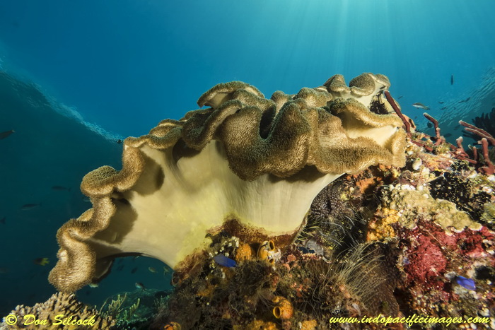 Underwater Beloi, Atauro Island_7