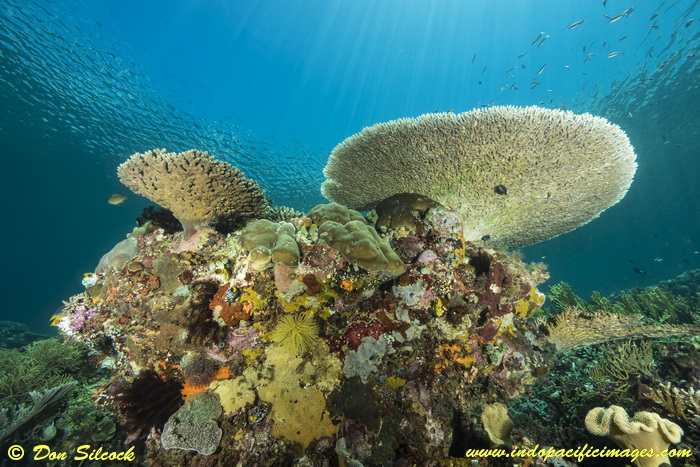 Underwater Beloi, Atauro Island_10
