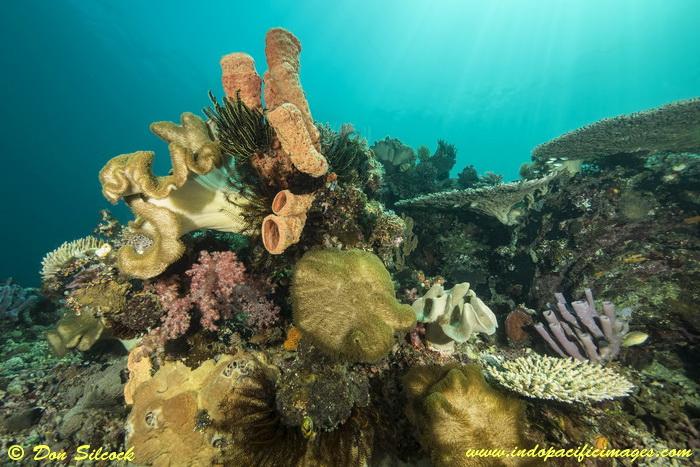 Underwater Beloi, Atauro Island_8
