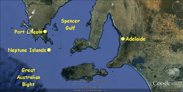 Australian Great White Shark Cage Diving - Map of South Australia's Spencer Gulf showing the Neptune Islands