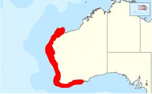 Australian Grey Nurse Shark - West Coast Distribution Map