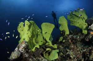 Papua New Guinea Scuba Diving - Milne Bay at its best