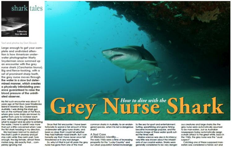Australian Grey Nurse Shark article
