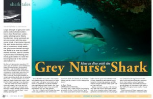X-Ray Grey Nurse Article