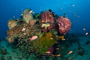 Scuba Diving in Timor Leste
