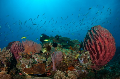Timor Leste – Dive Sites West of Dili