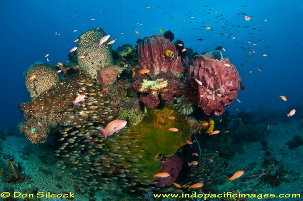 The Complete Guide to Diving Timor Leste - Maubara Bommie