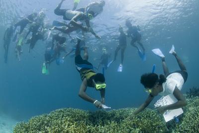 Kimbe Bay Conservation - Mahonia Na Dari