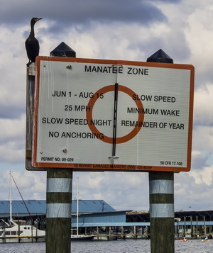 Manatee Speed Restrictions in Kings Bay