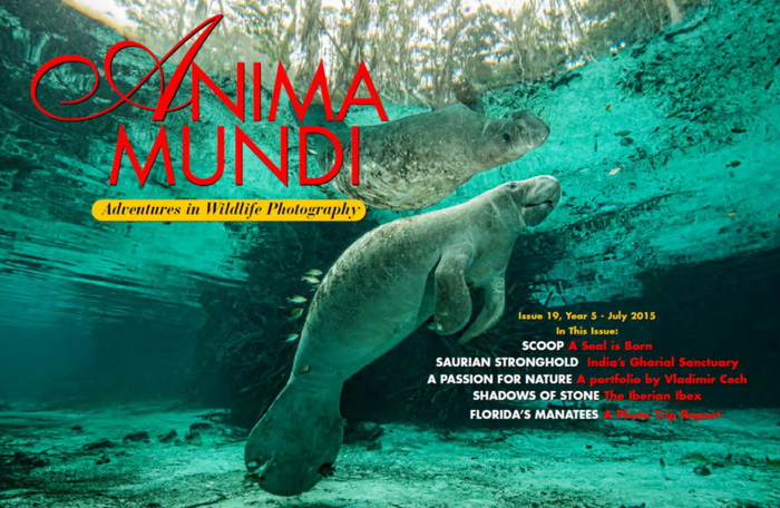 The Florida Manatee - Anima Munda article