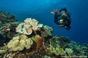 The Complete Guide to scuba diving Timor Leste