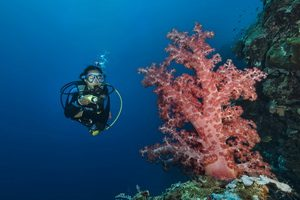 The Complete Guide to Diving Timor Leste - Atauro Island