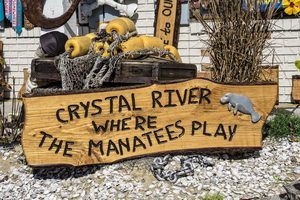 The Complete Guide to the Crystal River Manatees - Where the manatees play