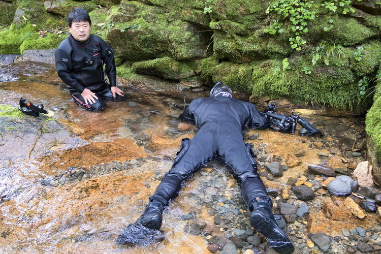 Where to see the Japanese Giant Salamander