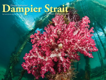 Resort Based Diving in Raja Ampat
