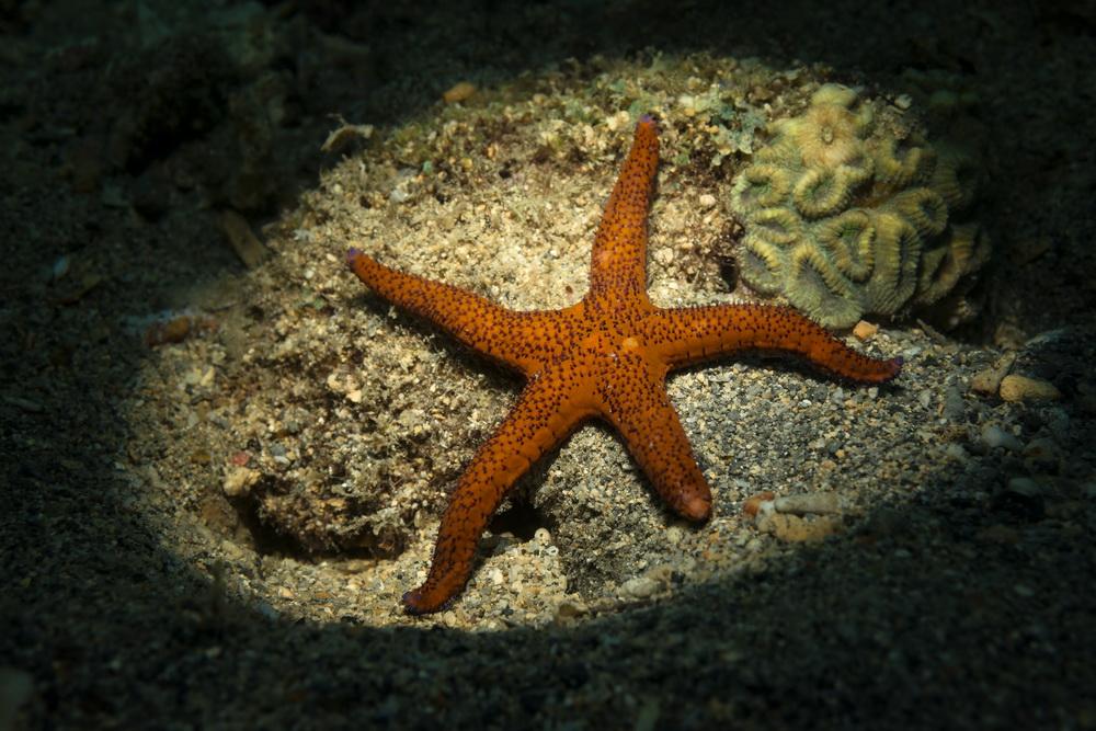 Samarai Island Jetty - a star is born...