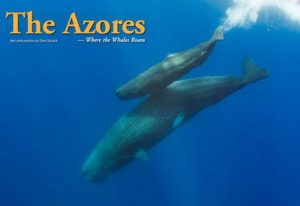 Azores Diving – Big Animals