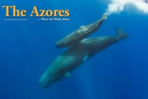 Scuba Diving in the Azores