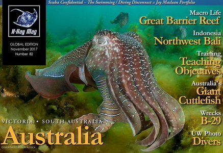 The Australian Giant Cuttlefish