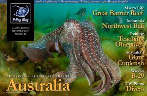 Amazing Australian Giant Cuttlefish