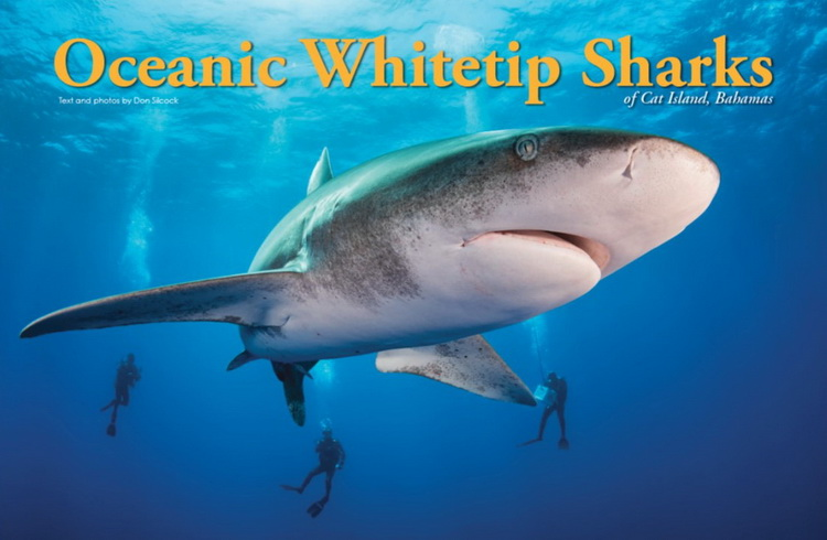 Oceanic Whitetip Sharks of Cat Island Article