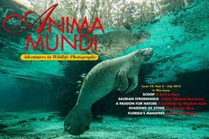 Anima Mundi_19_Cover_300
