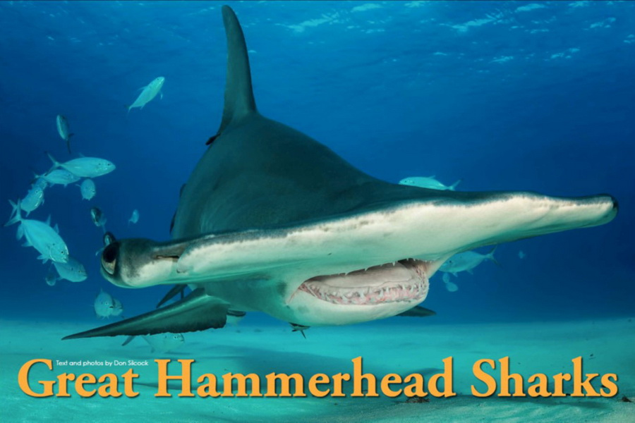 XR83_Great Hammerheads_Cover_900