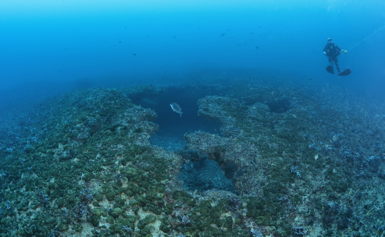 Protea Banks Diving