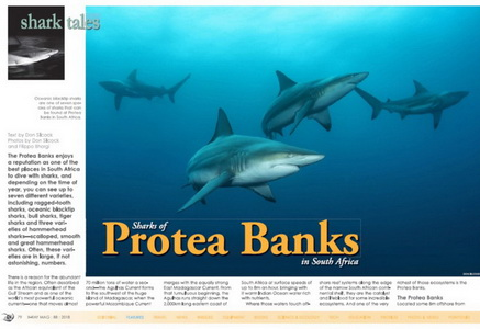 The Sharks of Protea Banks