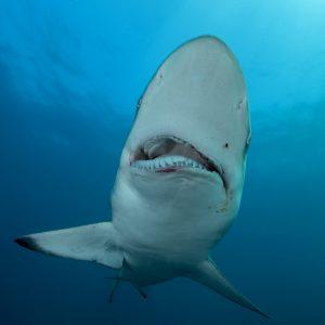 Sharks of Protea Banks