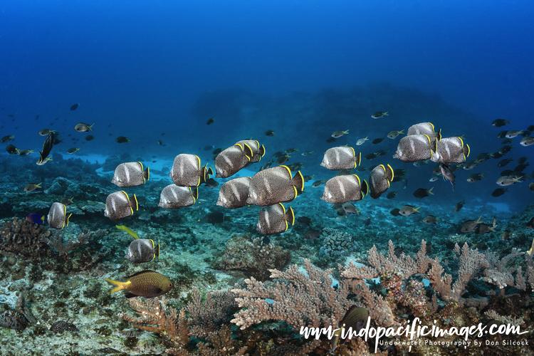 Diving the Ogasawara Islands