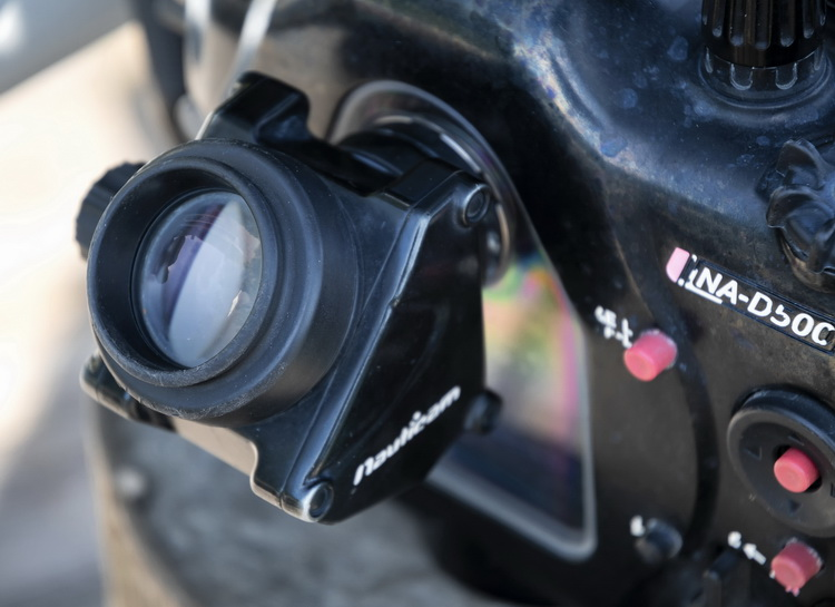 Nikon D500 for Underwater Photography