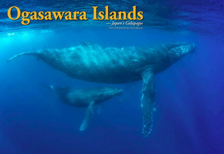 Diving the Ogasawara Islands