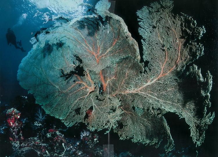 Deacon's Reef