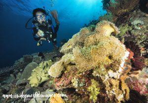 Atauro West Coast Diving