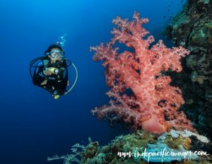 Complete Guide to Diving Atauro Island