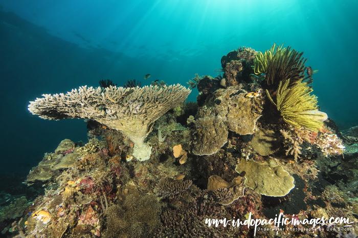Atauro East Coast Diving