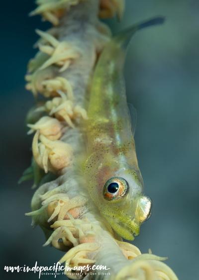 Milne Bay North Coast Dive Sites