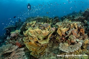 Diving Milne Bay