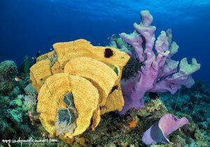 Diving Linden Harbour